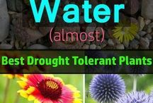 Drought Tolerant plants