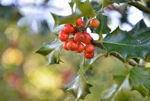 Otoño/Udazkena / El otoño es una estación preciosa en IrriSarri Land. No puedes perdértela. / by Irrisarri Land