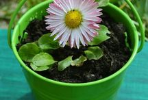 Gardenlove / kert,viràgok
