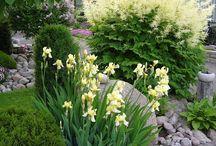 Garden plants&flowers
