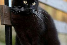 Black cats / I love all cats (I have 5 and still counting) but black cats are by far my favourite
