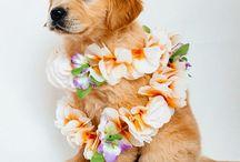 Future pup