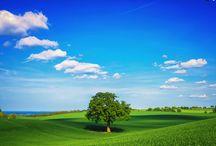ağaç panosu