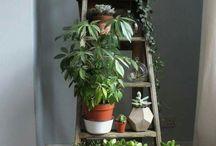 Houseplants decor