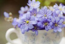 Flori cescuta