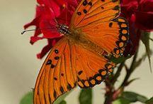Butterfly / moths / by S Y