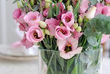 Blumenarten / Flowers / Die schönsten Blumen