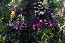 Flowers / Enid A. Haupt Conservatory #orchidnybg #orchidelirium @nybg #orchids #orchid #gardenias #gardenia #heliconia #birdofparadise #bouganvillea #jadevine #waterlily