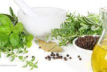Healing Properties of Herbs