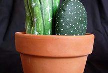 Galets cactus