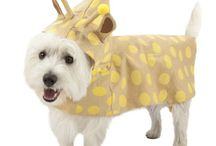 Spring Must-Haves / Spring is here! Make sure your pet is in on the latest spring fashion and pet trends. / by PetSmart