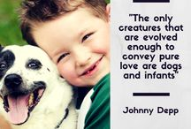 Quotes / Quotes about dogs & cats