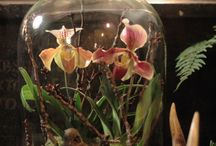 terrariums and other indoor or other planty things
