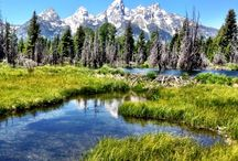 Jackson Hole / Our favorite images from around our town and valley! / by Inn on the Creek