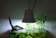 Aquarium nano / Aquascaping