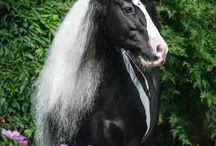 cavalli primavera