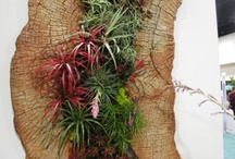 Air Plants / Air Plants / by Rebecca Littlefield