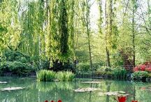 Monet's Garden at Giverny / Gardening