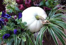 Fall Container Gardens / Easy and beautiful container gardens for the fall