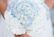 Preppy Wedding  / by Bluebird Productions