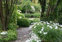 Trädgård ,blommor