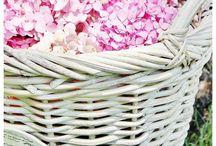 Have - blomster og planter