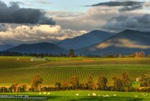 Gardens / Inspirational gardens in the Yarra Valley and Dandenong Ranges.