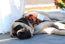 dog at a wedding?