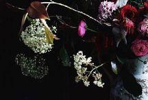 Blossom zine best pages / Le più belle pagine di Blossom zine