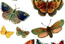 Butterflies and others/Motyle i inne...