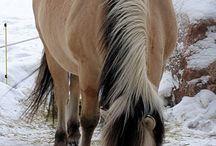 Horses / by Staci Grauman