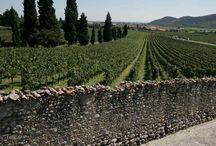 Wine Areas Near Poggio Verde