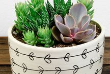 succulents' pots ideas