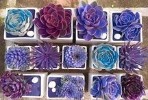 Sukulent, flowers