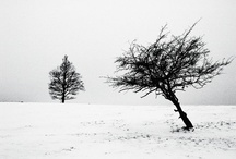 Little, tiny tree...
