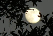 Moonscapes / Original photos of the moon - in its various phases - by Steve Hoffacker - to illustrate its beauty and character.