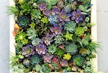 Succulent vertical gardens / Vertical garden's ideas for dry, sunny places