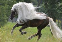 beautiful horses ♥ / horse