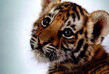 Animals :) / by Brittany Moya