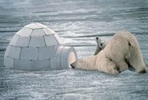 Polar Bears  / Pictures and Art of Polar Bears / by Marilyn Hockett