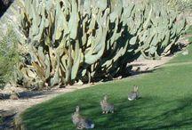 Animals Of Phoenix
