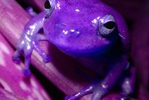 FROGS / by Trixie (lil Joan Jett) Crownover