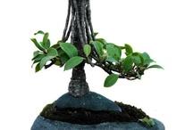 Bonsai free style