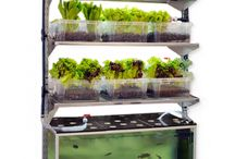 Aquaponics Feeds the World