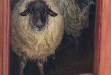 Sheep / by Vicki Hardcastle