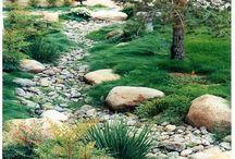Planting - Rain Garden