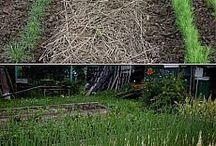сад , огород