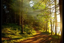 Cesty  v  prírode