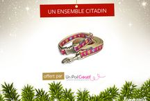 Concours yummypet