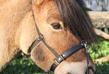 Pferd DIY